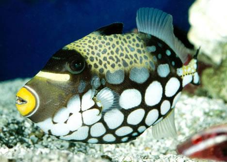 filet o'fish